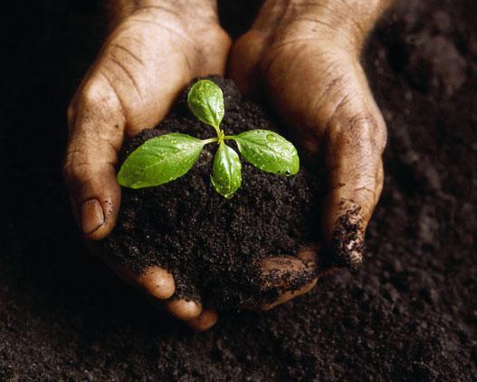 Organic Soil – Compost