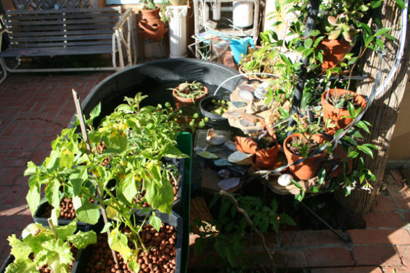 Home Made Aquaponics