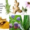 Nine of nature's most powerful traditional multi-use remedies
