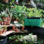 home-aquaponics