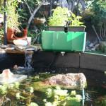home-aquaponics-2
