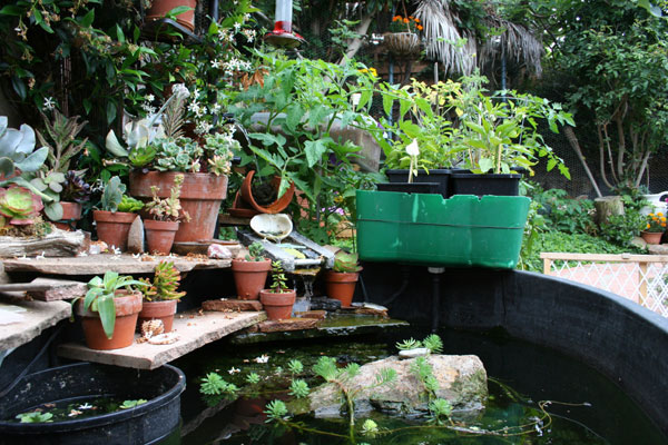 The aquaponics journal details easy aquaponics for Aquaponics hawaii