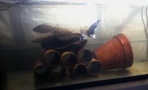 Tilapia Breeding Tank