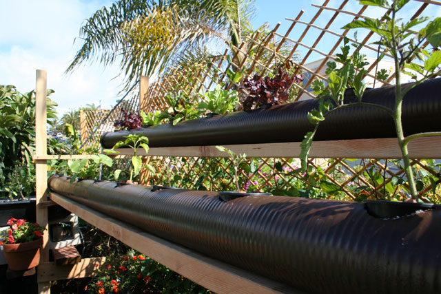 new-aquaponic-systems-133